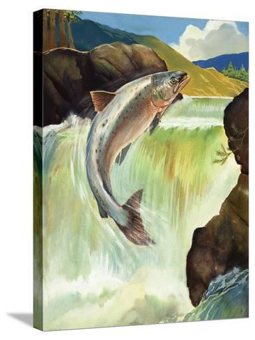 Salmon--Stretched Canvas Print