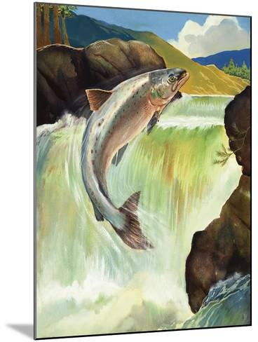 Salmon--Mounted Giclee Print
