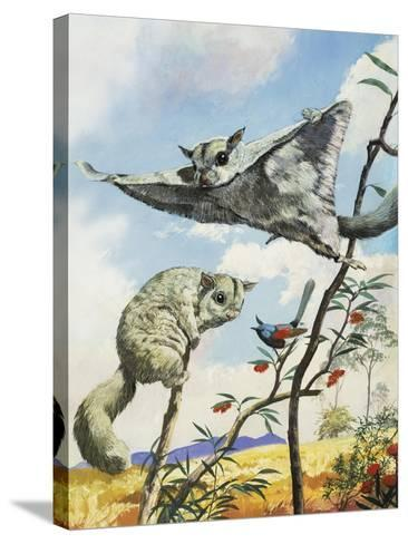 Flying Squirrels--Stretched Canvas Print
