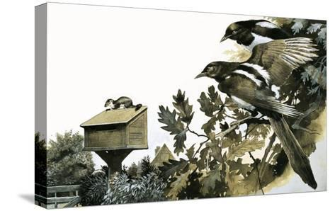Magpies Watching a Stoat Atop a Bird House-G^ W Backhouse-Stretched Canvas Print