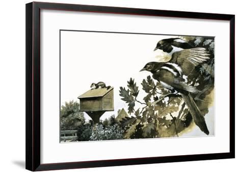 Magpies Watching a Stoat Atop a Bird House-G^ W Backhouse-Framed Art Print