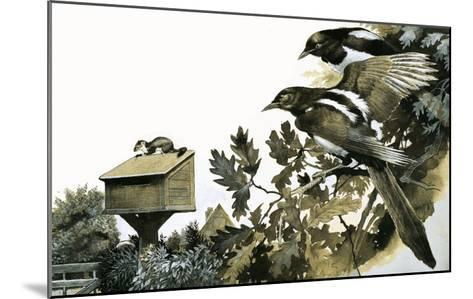Magpies Watching a Stoat Atop a Bird House-G^ W Backhouse-Mounted Giclee Print