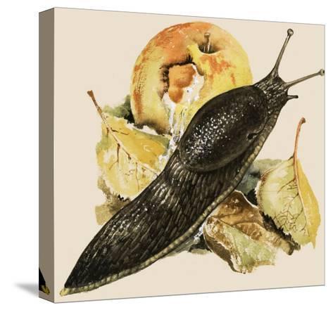 The Black Slug--Stretched Canvas Print
