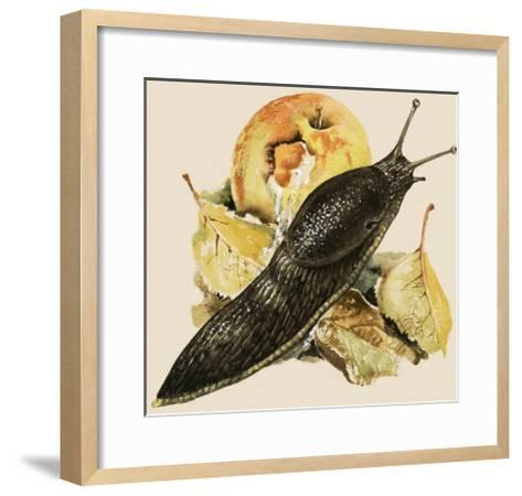 The Black Slug--Framed Art Print