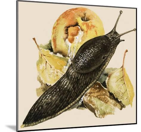 The Black Slug--Mounted Giclee Print
