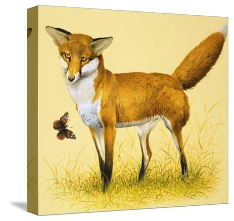 Fox and Butterfly--Stretched Canvas Print