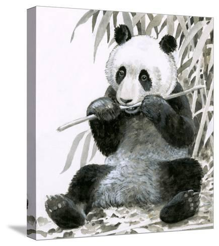Panda Chewing Bamboo--Stretched Canvas Print