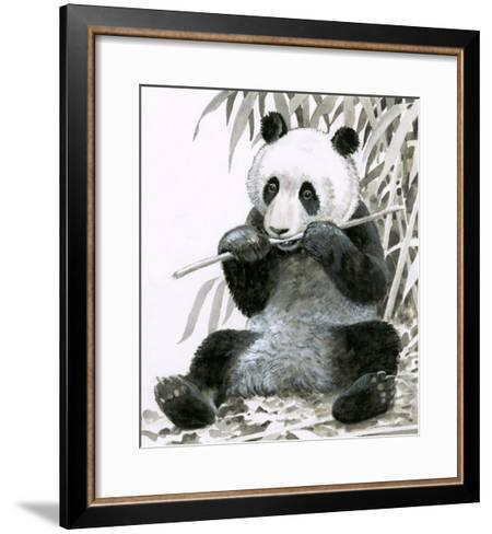 Panda Chewing Bamboo--Framed Art Print
