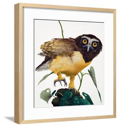 Spectacled Owl-Kenneth Lilly-Framed Art Print