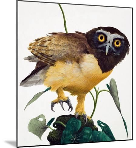 Spectacled Owl-Kenneth Lilly-Mounted Giclee Print