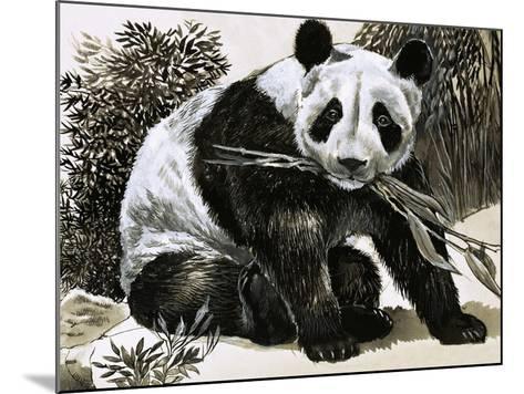 Panda--Mounted Giclee Print