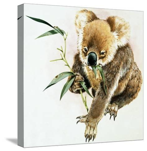 Koala--Stretched Canvas Print