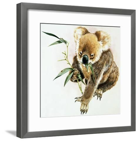 Koala--Framed Art Print