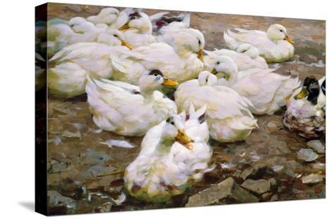 Ducks on a Pond-Alexander Koester-Stretched Canvas Print