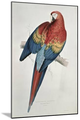 Red and Yellow Macaw-Edward Lear-Mounted Giclee Print