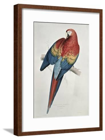 Red and Yellow Macaw-Edward Lear-Framed Art Print