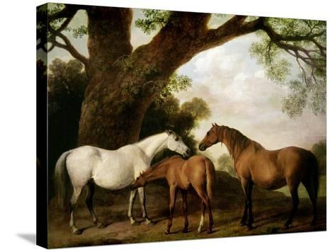 Two Shafto Mares and a Foal, 1774-George Stubbs-Stretched Canvas Print