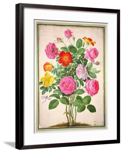 Roses, Plate 4 from the Nassau Florilegium-Johann Jakob Walther-Framed Art Print