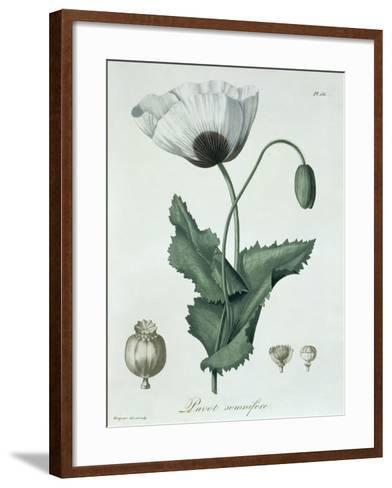 Papaver Somniferum from Phytographie Medicale by Joseph Roques-L.f.j. Hoquart-Framed Art Print