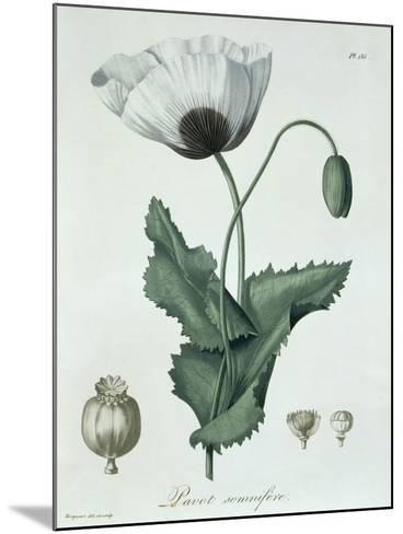 Papaver Somniferum from Phytographie Medicale by Joseph Roques-L.f.j. Hoquart-Mounted Giclee Print