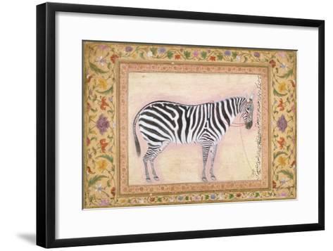 Zebra, from the 'Minto Album', 1621- Mansur-Framed Art Print