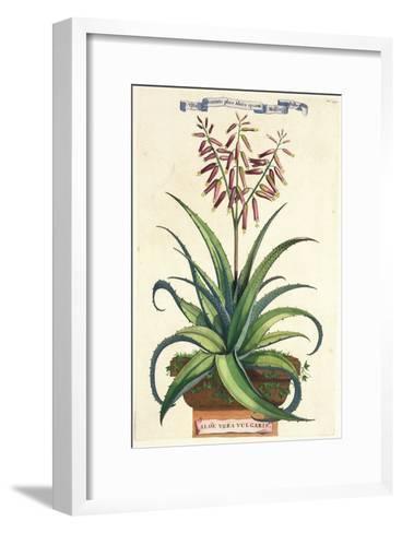 Aloe Vera Vulgaris, from Phytographia Curiosa, Published 1702-Abraham Munting-Framed Art Print