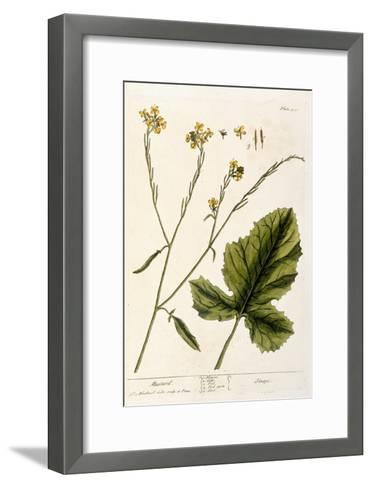 Mustard, Plate 446 from A Curious Herbal, Published 1782-Elizabeth Blackwell-Framed Art Print