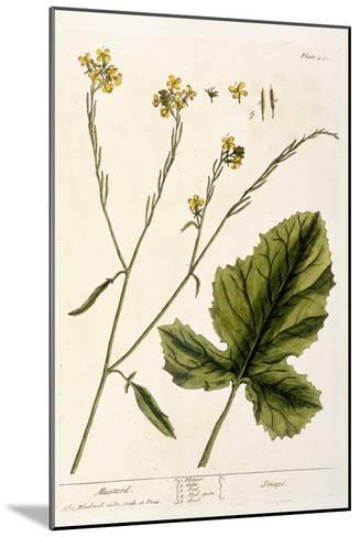 Mustard, Plate 446 from A Curious Herbal, Published 1782-Elizabeth Blackwell-Mounted Giclee Print