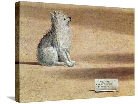 Vision of St. Augustine, Detail of the Dog, 1502-08-Vittore Carpaccio-Stretched Canvas Print