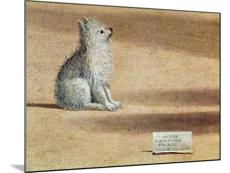 Vision of St. Augustine, Detail of the Dog, 1502-08-Vittore Carpaccio-Mounted Giclee Print