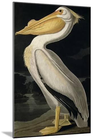 American White Pelican, from Birds of America, Engraved by Robert Havell-John James Audubon-Mounted Giclee Print