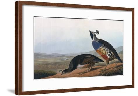 Californian Partridge, from Birds of America, Engraved by Robert Havell-John James Audubon-Framed Art Print