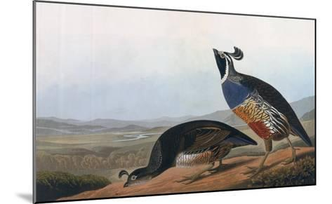 Californian Partridge, from Birds of America, Engraved by Robert Havell-John James Audubon-Mounted Giclee Print