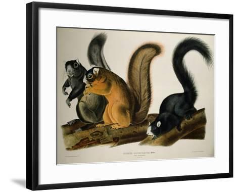 Fox Squirrel, from Quadrupeds of America, 1845-John James Audubon-Framed Art Print