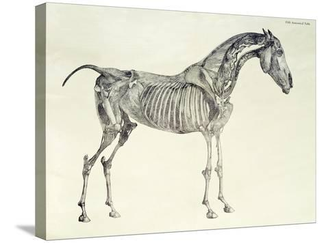 Fifth Anatomical Table, from The Anatomy of the Horse-George Stubbs-Stretched Canvas Print