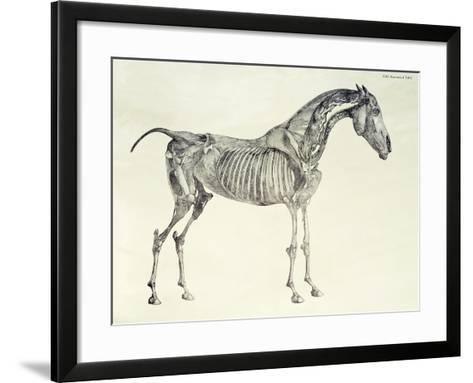 Fifth Anatomical Table, from The Anatomy of the Horse-George Stubbs-Framed Art Print