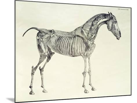 Fifth Anatomical Table, from The Anatomy of the Horse-George Stubbs-Mounted Giclee Print