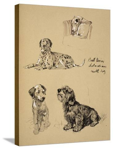 Bull Terrier, Dalmatians and Mutt Dog, 1930, Just Among Friends, Aldin, Cecil Charles Windsor-Cecil Aldin-Stretched Canvas Print