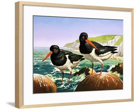 Oystercatchers, Illustration from Once Upon a Time--Framed Art Print