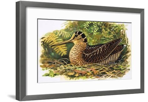 Looking at Nature: The Woodcock-R. B. Davis-Framed Art Print