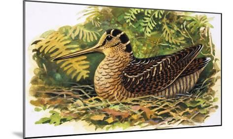 Looking at Nature: The Woodcock-R. B. Davis-Mounted Giclee Print