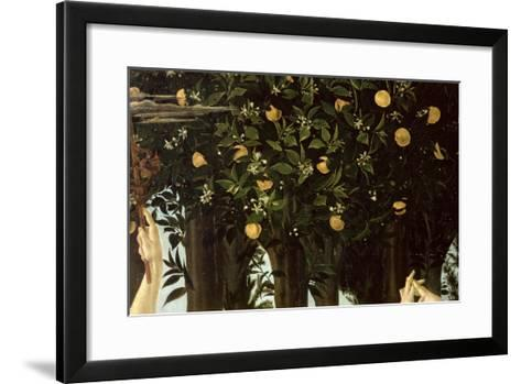 Primavera, Detail of the Orange Tree, c.1478-Sandro Botticelli-Framed Art Print