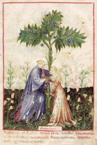 Fennel, from Tacuinum Sanitatis, c.1390-1400--Stretched Canvas Print