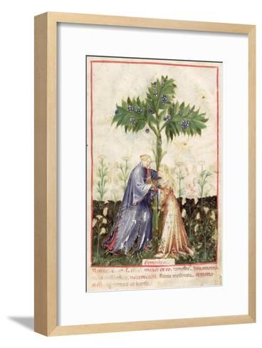 Fennel, from Tacuinum Sanitatis, c.1390-1400--Framed Art Print