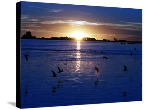 The Sun Sets as Sea Gulls Flies Over Flooded Argentina's Pampas--Stretched Canvas Print