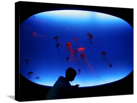 A Visitor Looks at the Jellyfish Called Brown Sea Nettle--Stretched Canvas Print