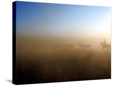 A Herd of Horses is Taken out Runs Across the Grounds Near a Temporary Race Course Ground--Stretched Canvas Print