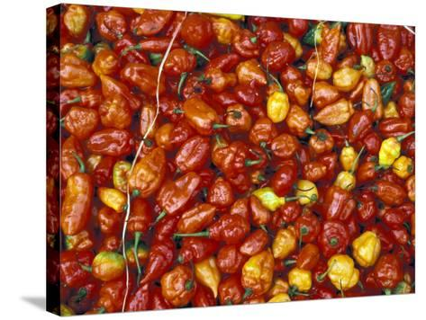 Hot Red Pepper at the Local Market, Madagascar-Michele Molinari-Stretched Canvas Print