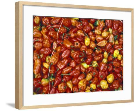 Hot Red Pepper at the Local Market, Madagascar-Michele Molinari-Framed Art Print
