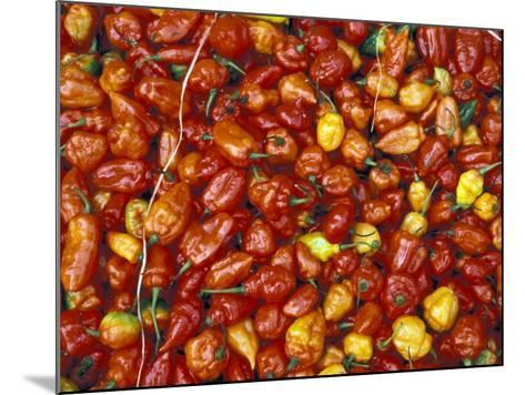 Hot Red Pepper at the Local Market, Madagascar-Michele Molinari-Mounted Photographic Print
